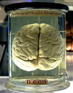 Ruba cervelli