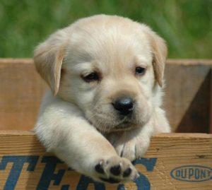 Il migliore amico dell'uomo: il cane