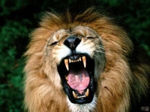 Perché il leone è considerato il re degli animali?
