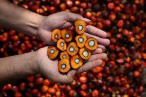 E' vero che l'olio di palma fa male?