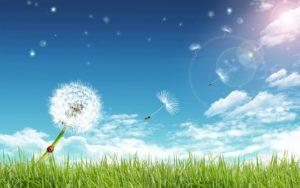 La Vita è il dono più bello