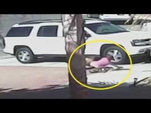 Cane randagio morde un bambino