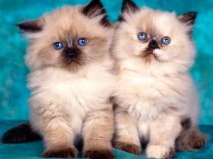 Quanti anni vive un gatto più o meno?
