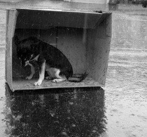 cane abbandonato sensazioni