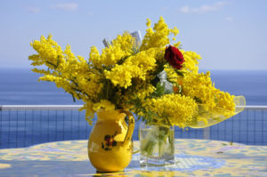 festa della donna mimose