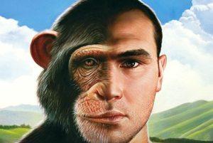 E' vero che l'uomo discende dalla scimmia