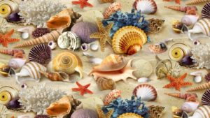 Perché nella conchiglia si sente il rumore del mare?