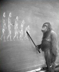 uomo e scimmia