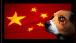 Yulin carne di cane
