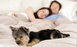 cane-dorme-poco
