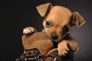 cane morde mani e piedi sempre