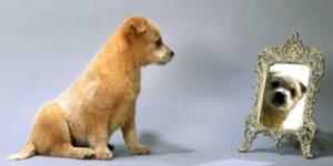test-di-campbell-cane