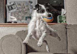 cane-iperattivo-calmare