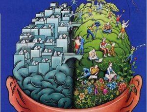 cellulite-cervello