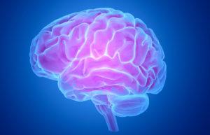 il cervello-curioso