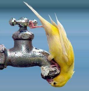 frasi acqua