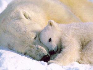 Frasi, pensieri e messaggi sugli animali