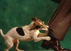 cane aggressivo padrone