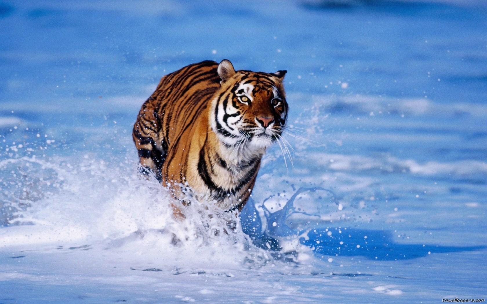 Frasi pensieri e messaggi sugli animali frasi aforismi for Sfondi desktop animali