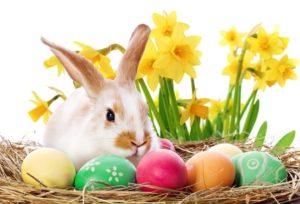 Buona Pasqua Tante Frasi