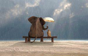 Frasi educative sulla gentilezza