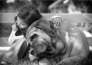 aforismi citzioni belle cani