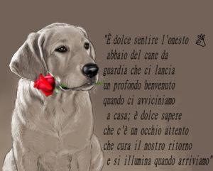 Le pi belle frasi di tutti i tempi dedicate ai cani for Casa progetta il trotto del cane