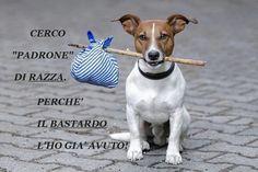 slogan abbandonare cane