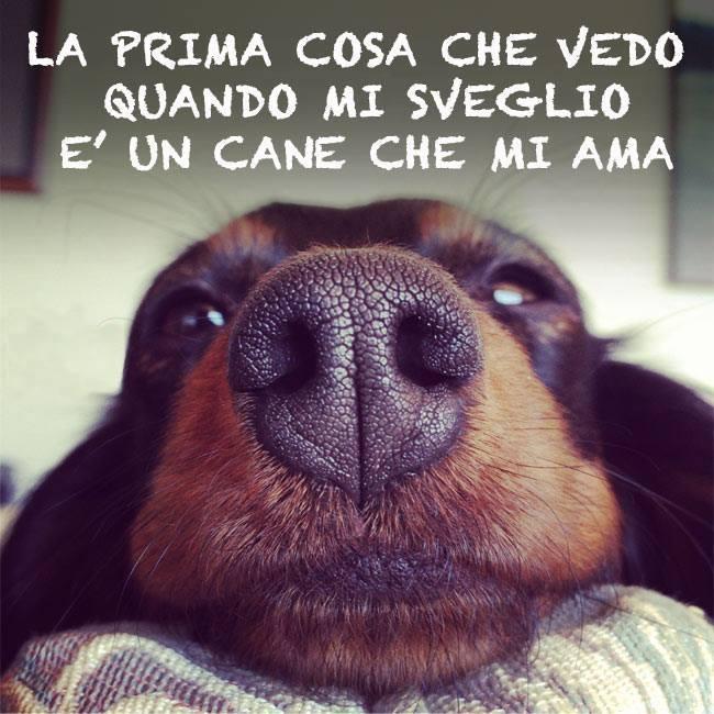 10 frasi sui cani le pi belle e significative frasi for Cani che non vogliono fare il bagno