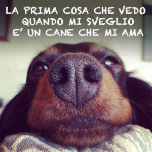 10 frasi sui cani le pi belle e significative frasi for Casa progetta il trotto del cane
